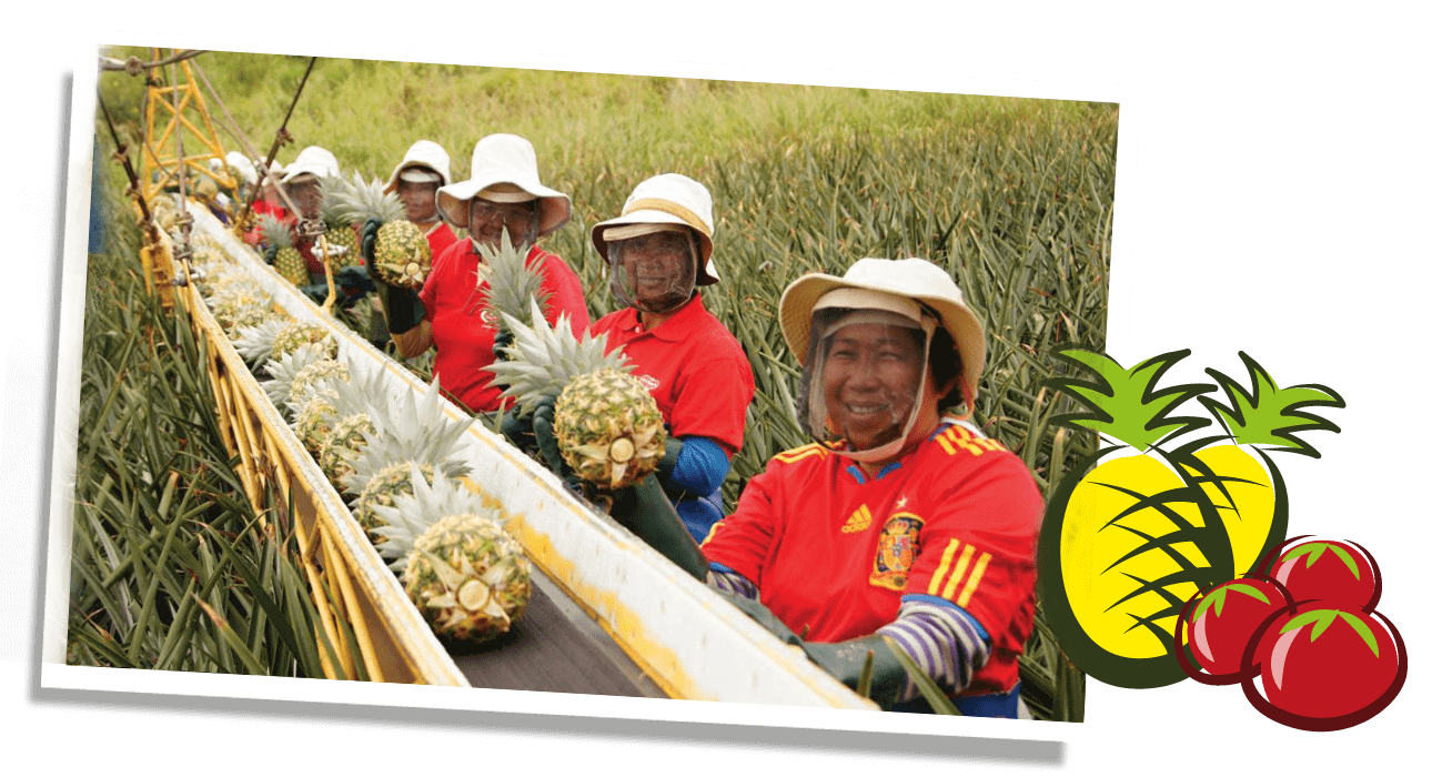 Life Gets Better farmers holding pineapples